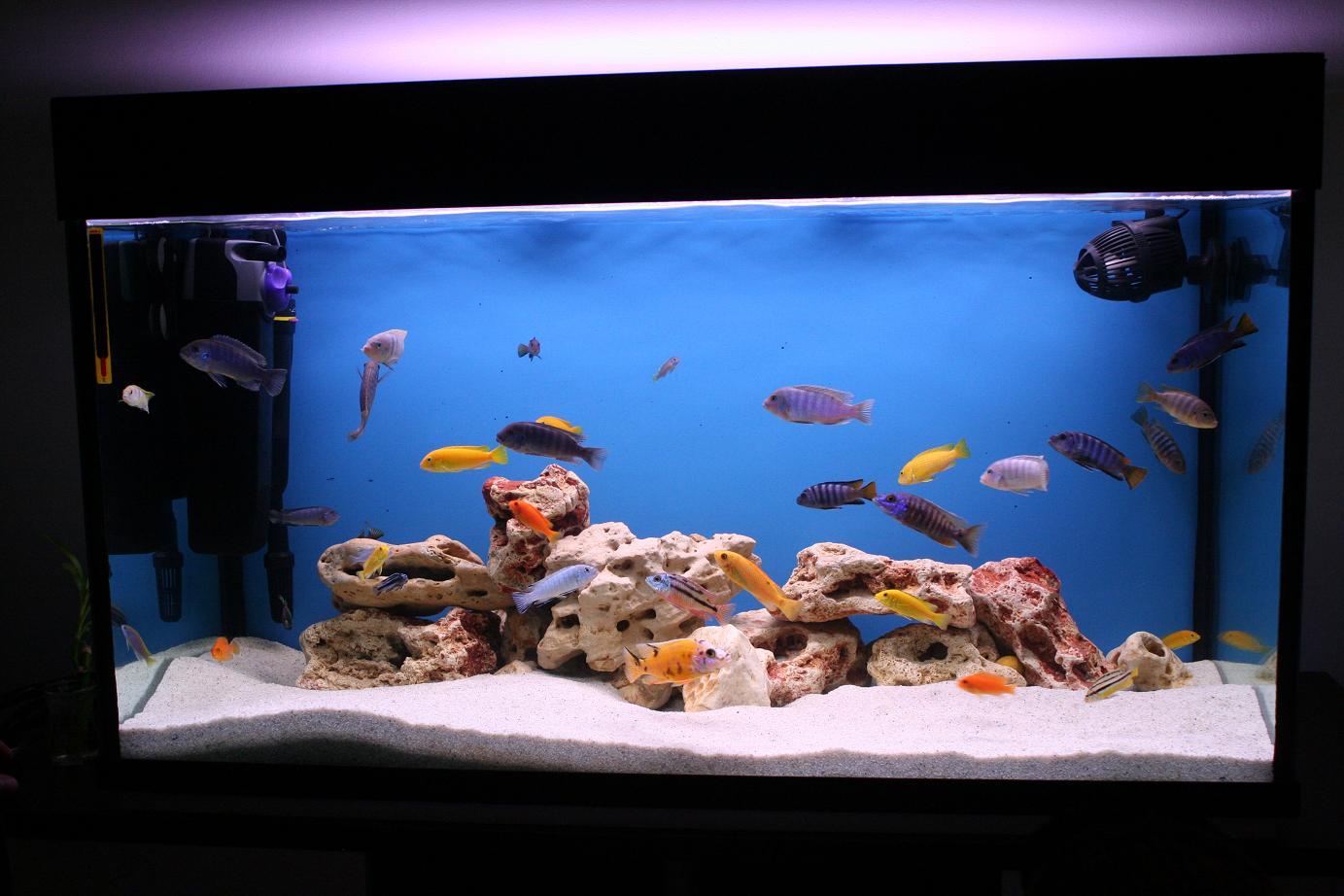 Fish aquarium ideas - Image