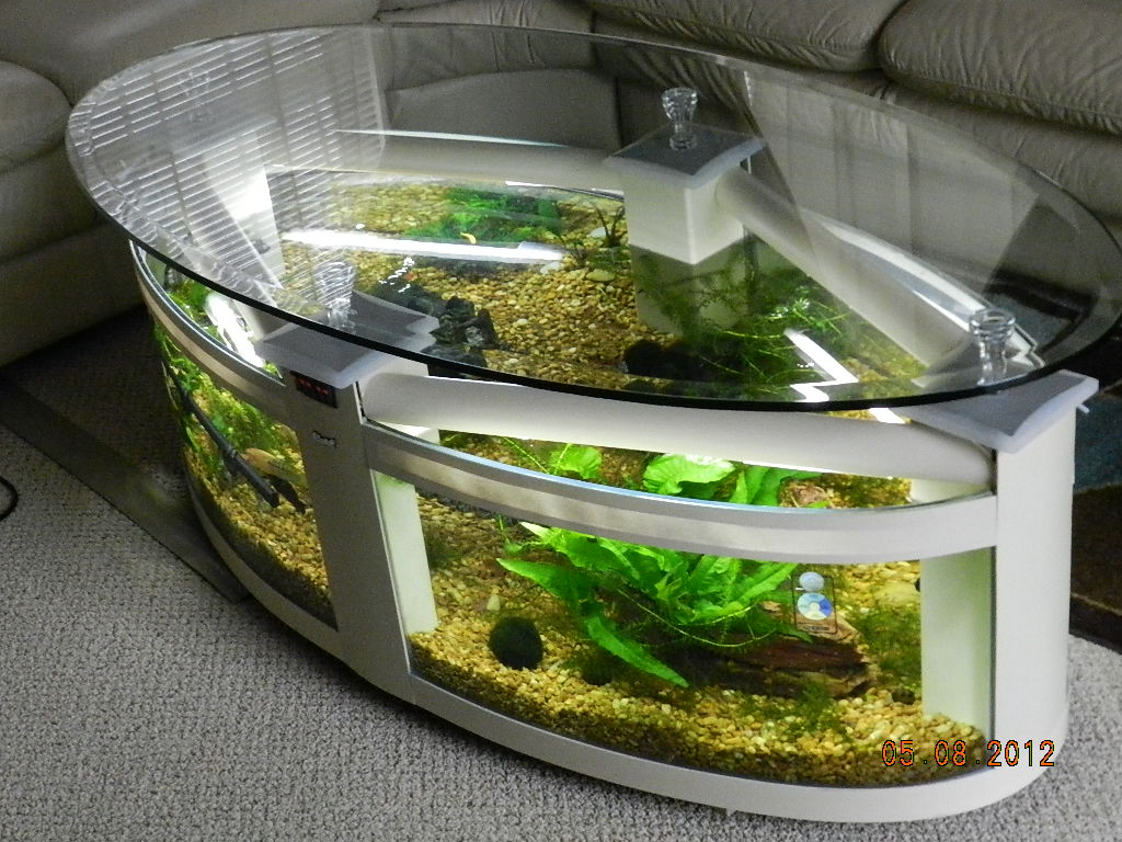 Aquarium Als Couchtisch Updated Photos Of My Coffee Table Tank Aquarium Advice