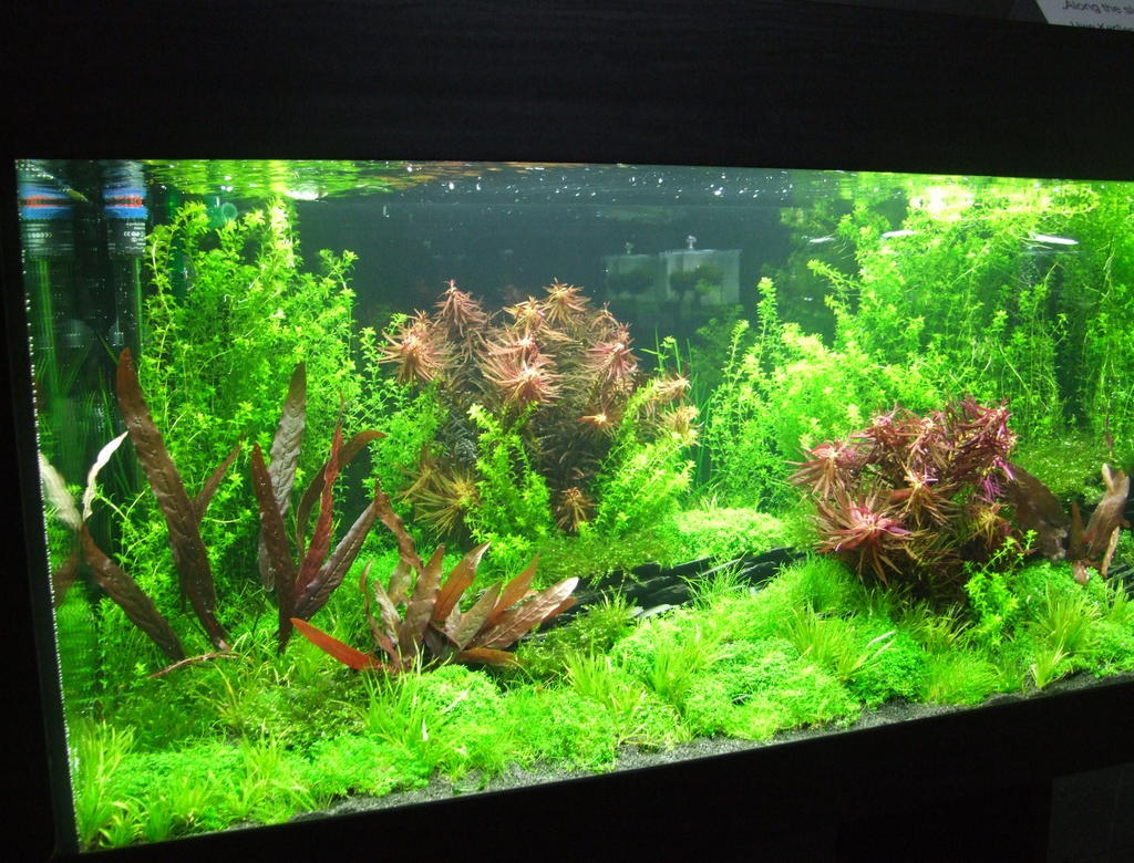 Einrichten Aquarium Aquarium Einrichten Aquarium Knowhow
