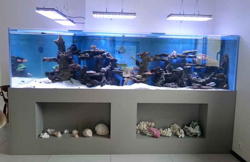 Fabrication Meuble Aquarium Sur Mesure Aquarium Location Services | Fabrication, Installation Et