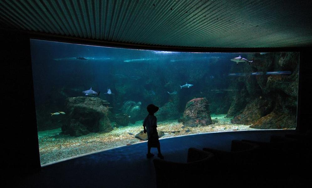 Aquarium-Guadeloupe001