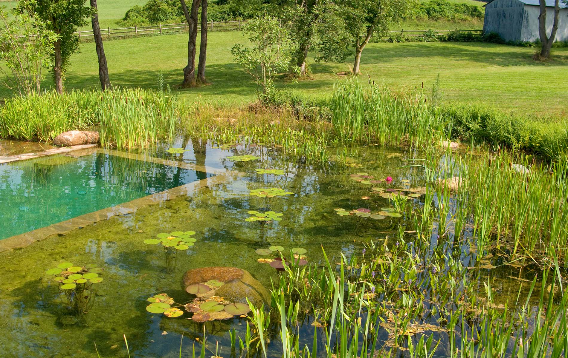Schwimmingpool Natur Natural Swimming Pool | Aqua System