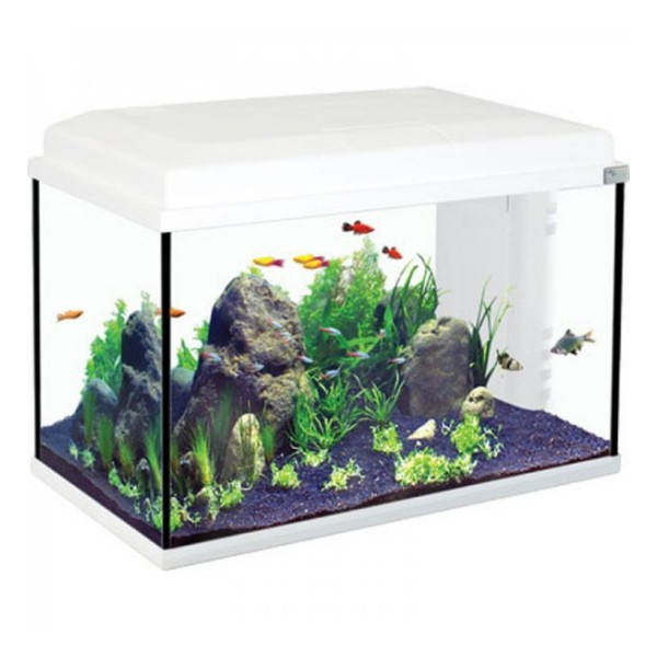 Eclairage Led Aquarium Eau Douce Aquarium Aquatlantis Start 55 Blanc