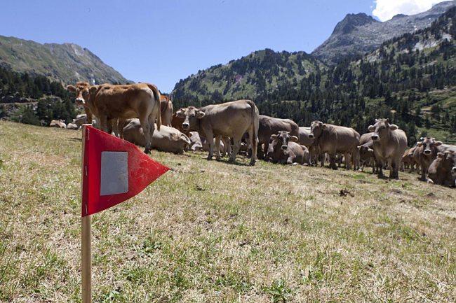 Banderines reflectantes señalando el recorrido..