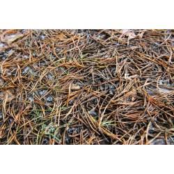 Small Crop Of Pine Needle Mulch