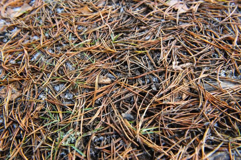 Large Of Pine Needle Mulch