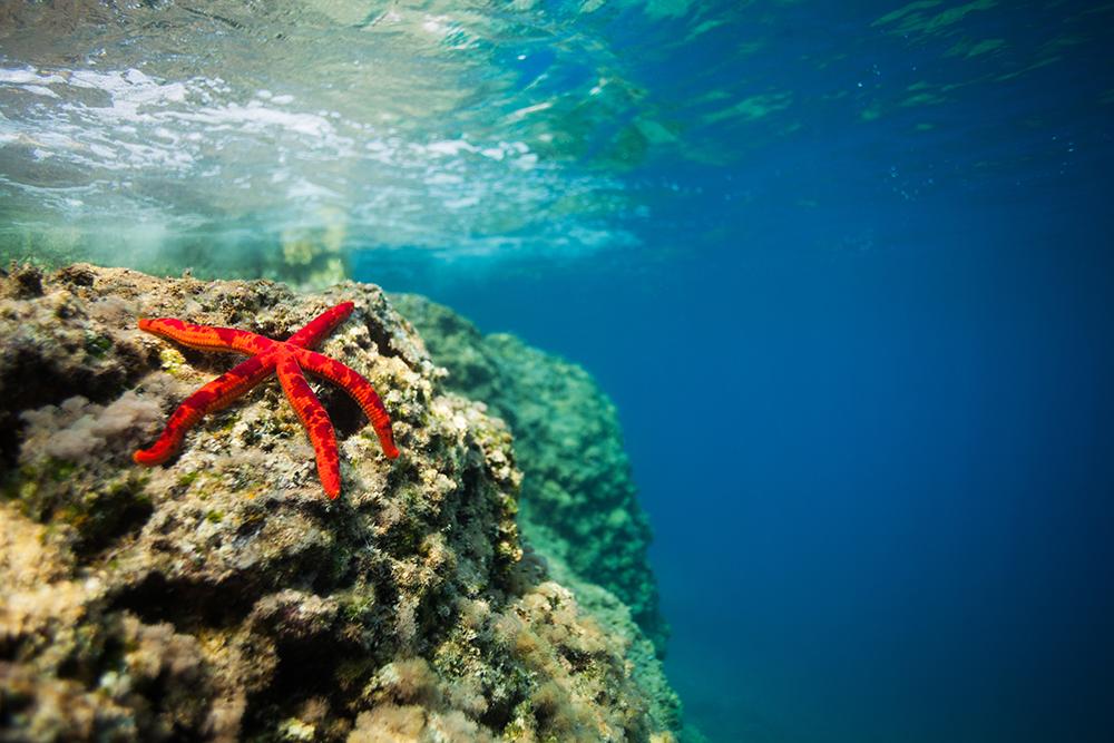Girly Wallpapers Hd Underwater Sea Rocks
