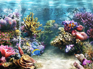 Fish Tank Backgrounds Printable Images & Pictures   Becuo