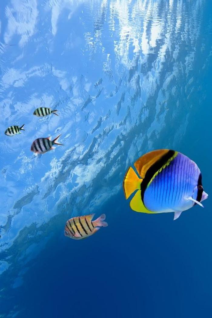 Tropical Ocean 3d Live Wallpaper Cr 233 Atures Uniques Qui Habitent Le Fond Marin Archzine Fr