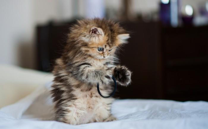 Super Cute Baby Cats Wallpaper Les Images De Chaton Mignon Qui Vont Vous Donner Un Grand