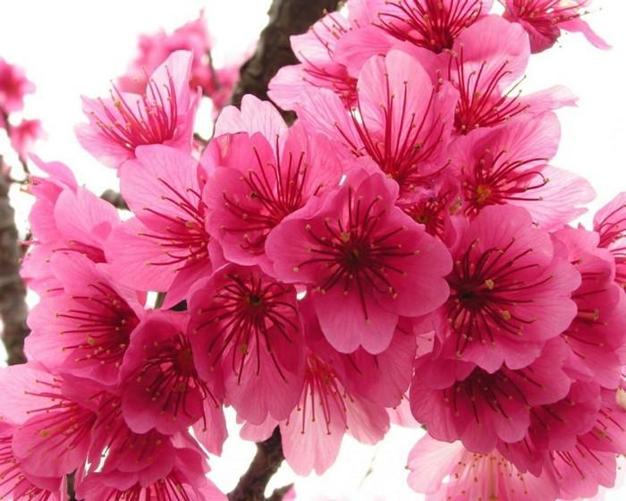 Beautiful Cute Roses Wallpapers Fonds D 233 Cran Printemps Qui Vont Inspirer Votre Journ 233 E