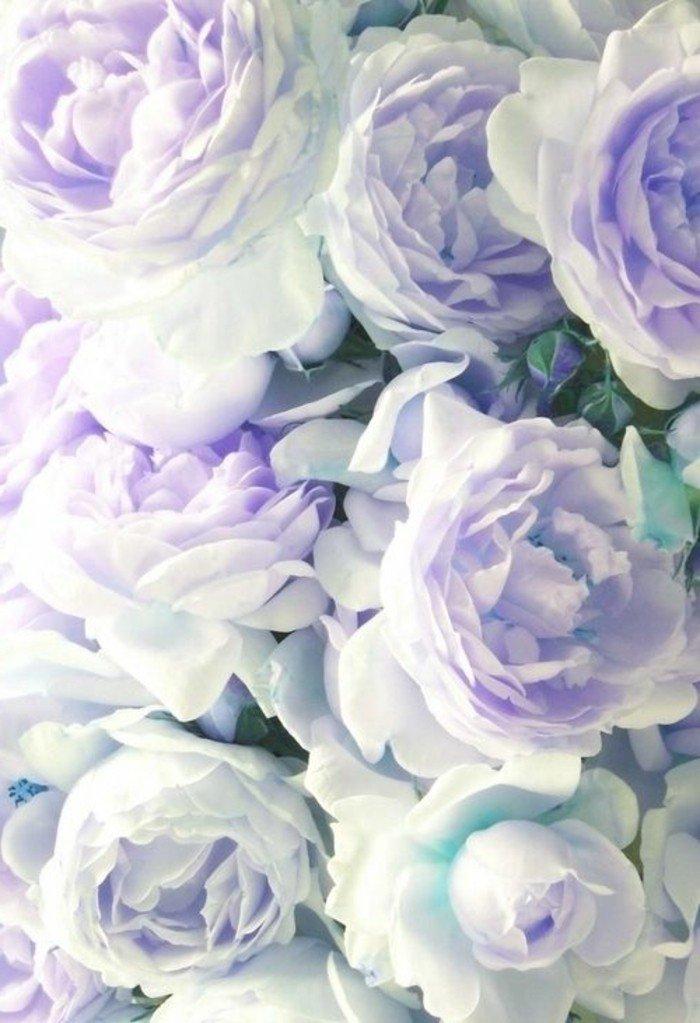 Beautiful Cute Roses Wallpapers Les Plus Belles Fleurs Violettes En Beaucoup D Images