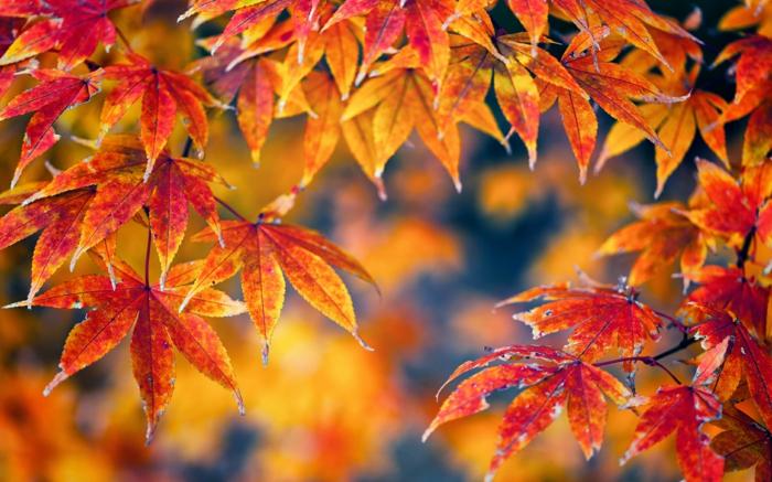 Pc Fall Wallpapers Fond Ecran Gratuit Fleurs Automne