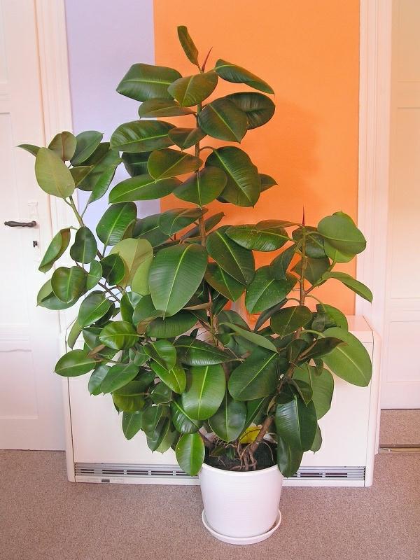 Pflegeleichte Zimmerpflanzen Wenig Licht