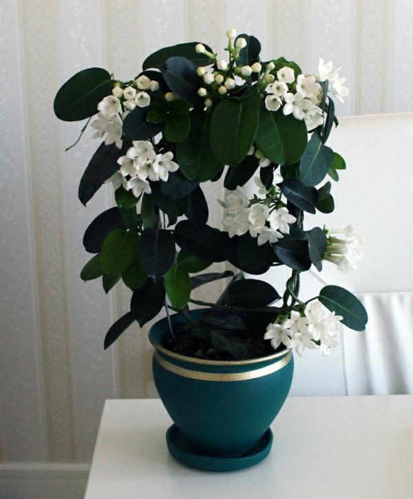 Dekorative Pflanzen Fürs Wohnzimmer. pflegeleichte zimmerpflanzen ...
