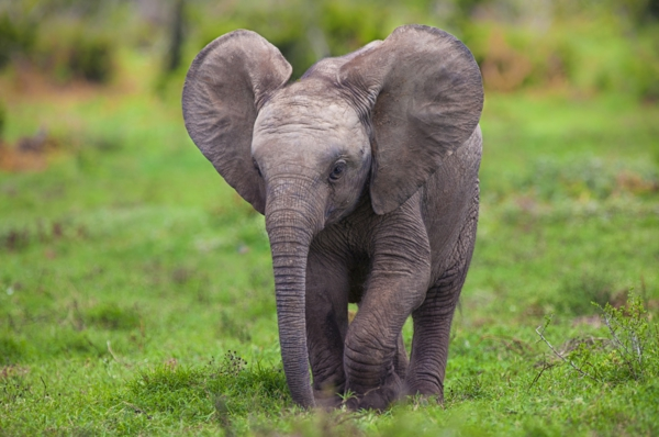Cute Teddy Bear Live Wallpaper Free Download 25 S 252 223 E Bilder Vom Baby Elefant