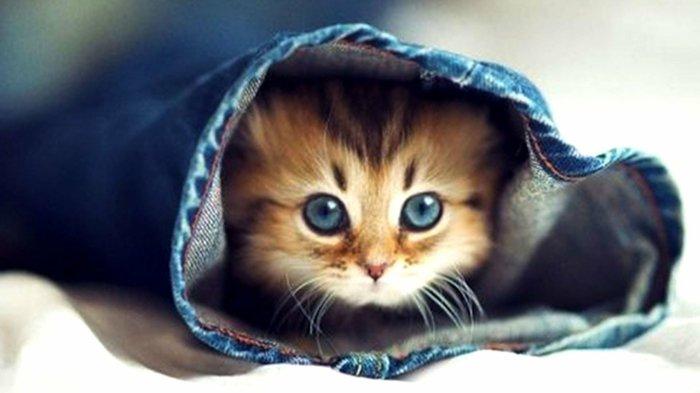 Cute Baby Hd Wallpaper S 252 223 E Katzen Fotografiert Im Richtigen Moment