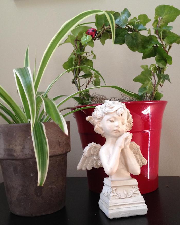 Pflanzen Für Badezimmer Mit Wenig Licht