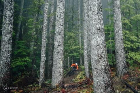 Sarah Leishman back among the big trees of Coastal BC