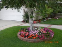 front yard landscaping ideas around trees  Design and Ideas