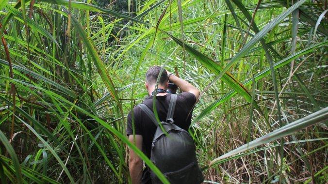 Exploring Chitwan National Park, Nepal, on foot. A man walking on a path between long grass.