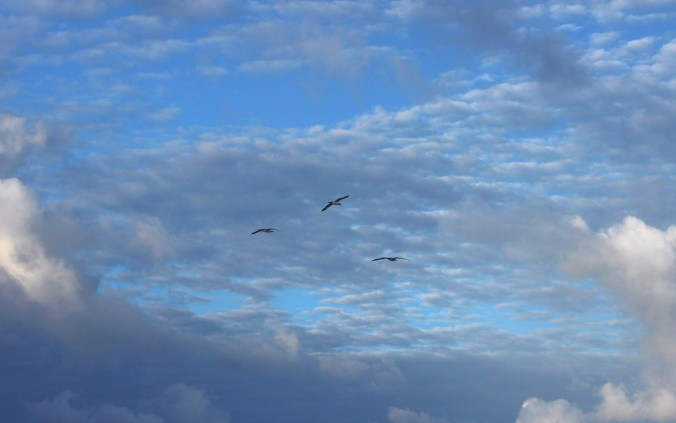 Birds flying over a cargo ship crossing the Pacific Ocean.