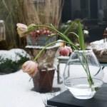 Ett magnifikt glashus, vajande bambu och porlande vatten- på besök hos Charlotta!