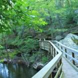 The second (north) footbridge on the Cedar Creek Trail.