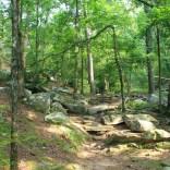Petit Jean: Cedar Creek Trail - 1mi photo