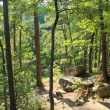 Petit Jean: Cedar Creek Trail - 1 mi photo