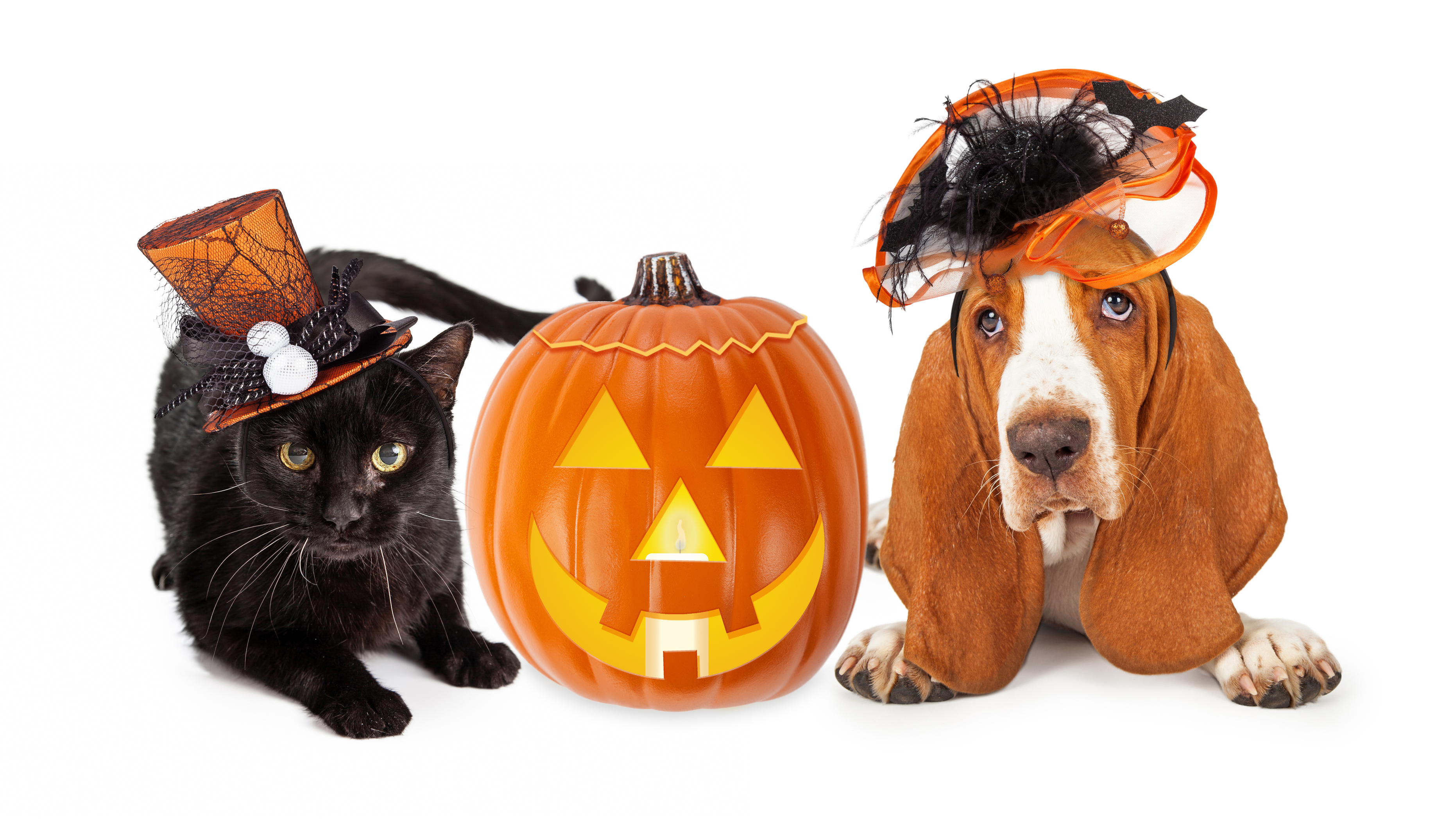 Keep Your Pet Safe On Halloween Tips And Tricks To Keep