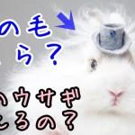 アンゴラウサギの毛の価格はいくら?この兎の飼い方や値段も!