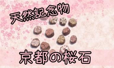 桜石が見れる京都の神社の場所はどこ?入手は通販でも購入可能!?