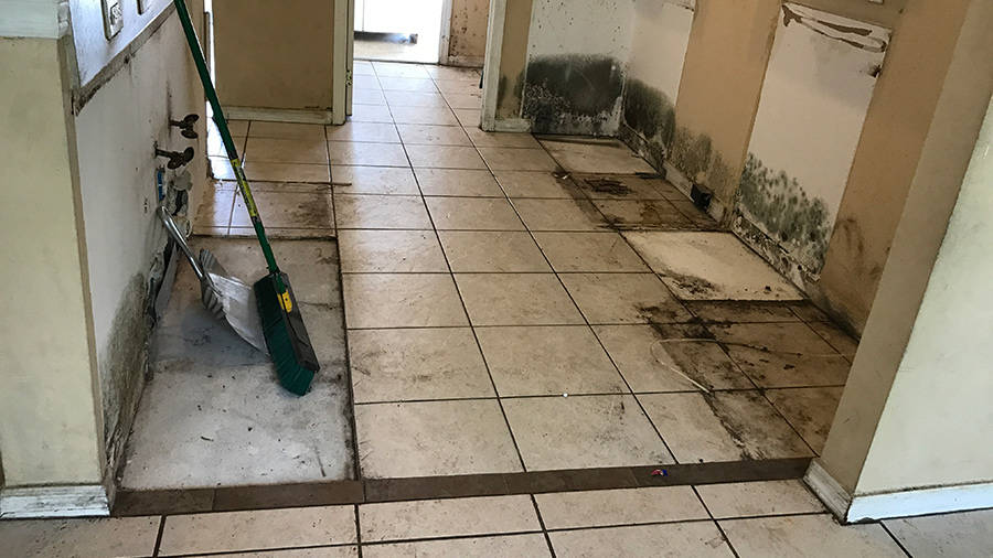 Mold Removal Remediation Armstrong Water Mold Cleanup