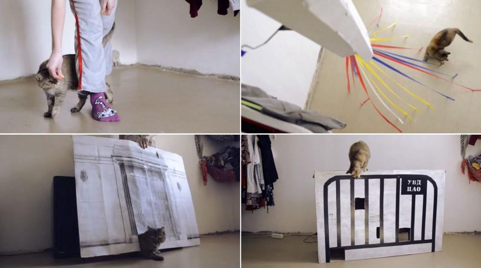 Группировка eeefff. Проект «Кошка-скаут». Фрагменты из видео. 2015