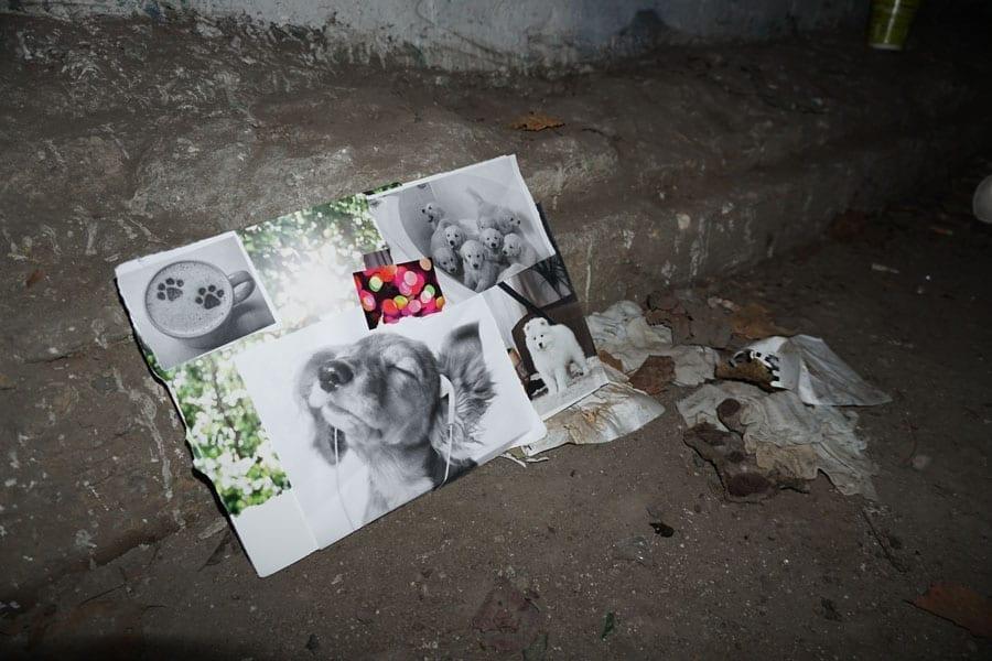 Работа Маши Андреевой