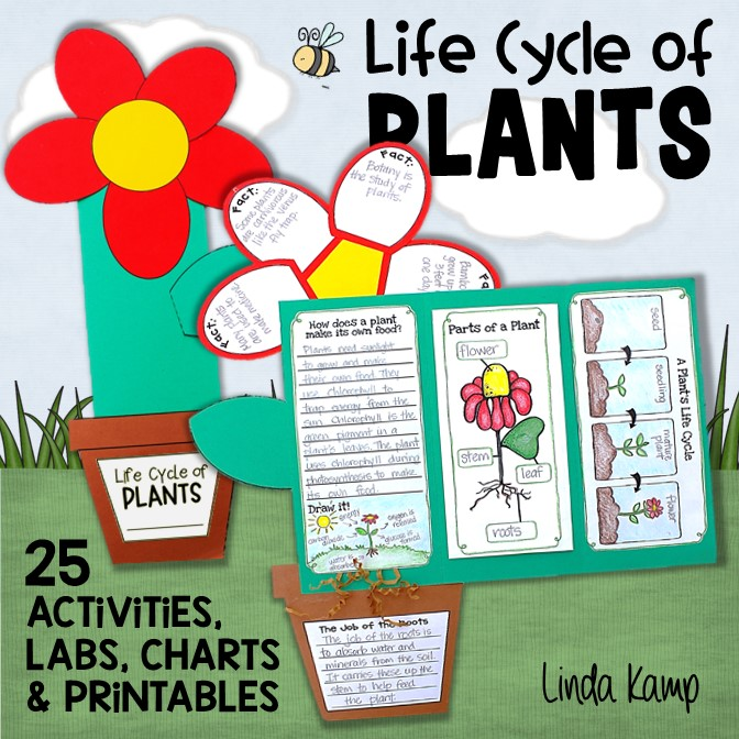 Plant Life Cycle Activities for Kids-Teaching Plants the Fun Way