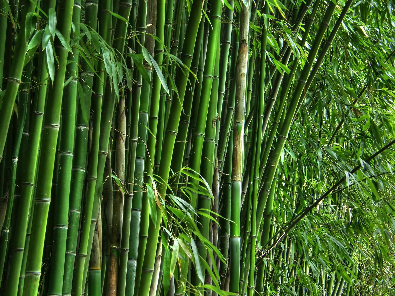 Start Calendar Kids Calendar 04 Explore Japan Kids Web Japan Web Japan Quot;tropical Bamboo In The Usquot; Aroundwellington