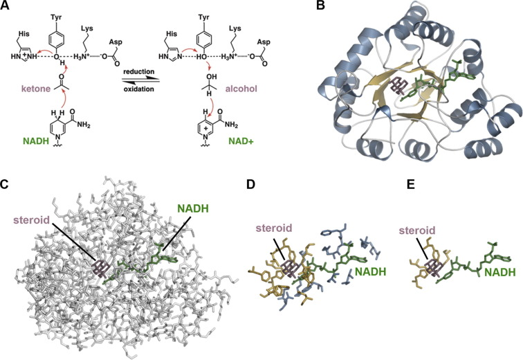 Revisiting protein structure, function, and evolution in the genomic