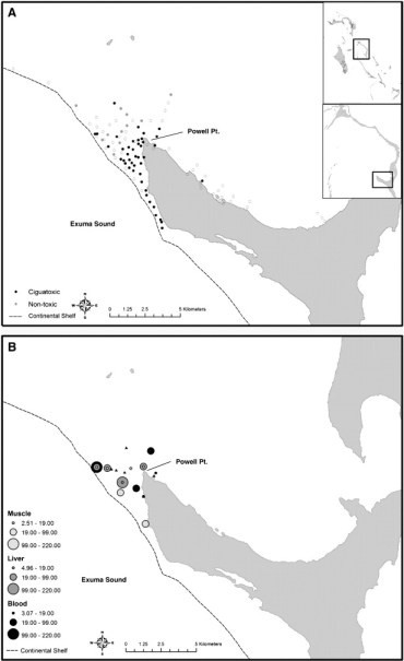 Spatial distribution and ecology of S. barracuda for ciguatoxin analysis near Cape Eleuthera, The Bahamas. A) Receiver stations at which telemetered barracuda were detected during the study period. Black circles represent stations that were visited by fish that tested positive for blood ciguatoxin and grey circles represent stations that had fish which did not exhibit ciguatoxin like activity. Open circles represent receiver stations included in the telemetry array during the study period that were not visited by tagged barracuda. B) Individual barracuda capture locations with associated muscle, liver, and blood CTX concentrations (pg/ml). Black filled triangles represent capture locations for barracuda that did not test positive for CTX. source: http://i0.wp.com/ars.els-cdn.com/content/image/1-s2.0-S0048969711013684-gr2.jpg?resize=370%2C605