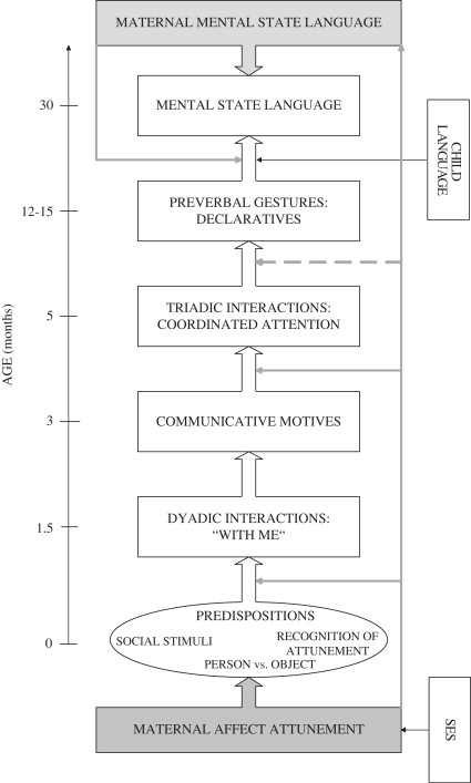 The role of dyadic communication in social cognitive development