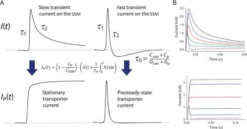 SSM-Based Electrophysiology for Transporter Research - ScienceDirect