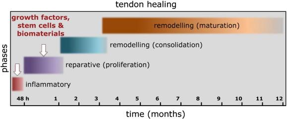 Biologics for tendon repair - ScienceDirect