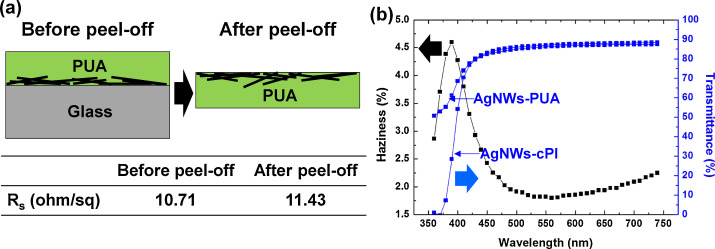 Silver nanowire networks embedded in urethane acrylate for flexible