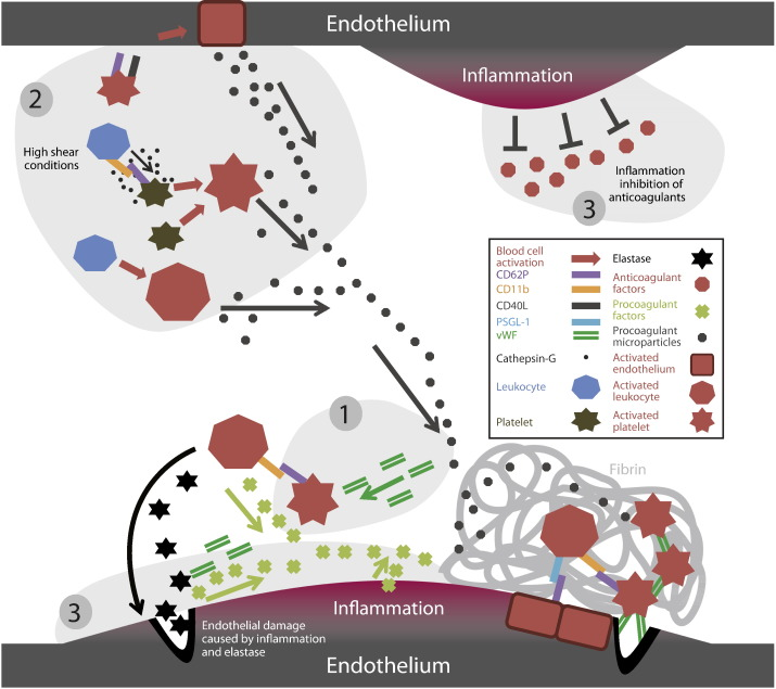 Mechanisms of thrombogenesis in polycythemia vera - ScienceDirect