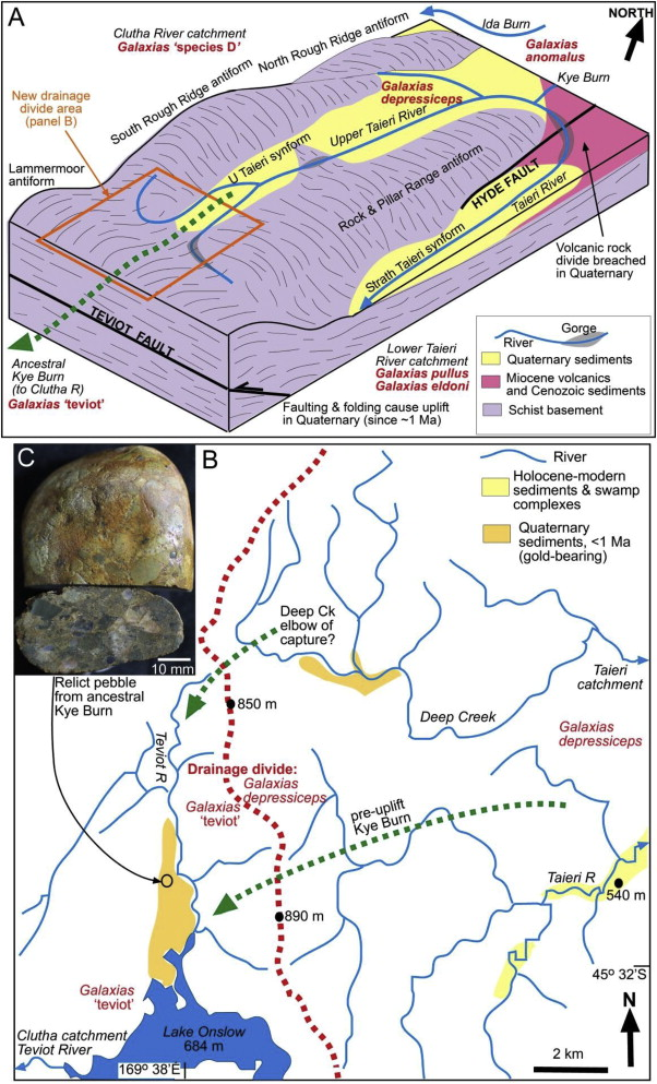 Geology shapes biogeography Quaternary river-capture explains New