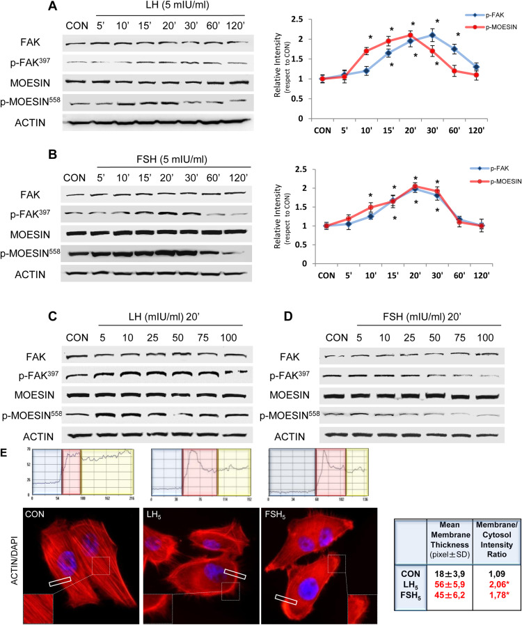LH and FSH promote migration and invasion properties of a breast