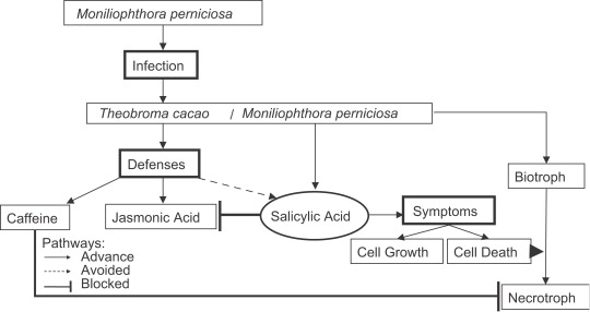 Necrotrophic phase of Moniliophthora perniciosa causes salicylic