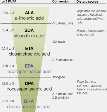 Effects of omega-3 polyunsaturated fatty acids on human brain