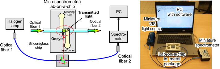 Lab-on-a-chip spectrophotometric characterization of porcine oocytes